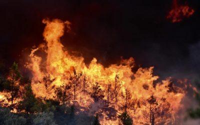 Αλληλεγγύη στους πληγέντες από τις φονικές πυρκαγιές στην Ανατολική Αττική